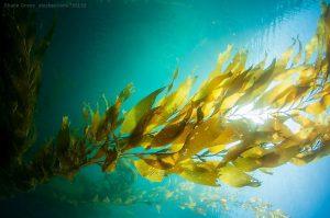 Seaflora Skincare Blog