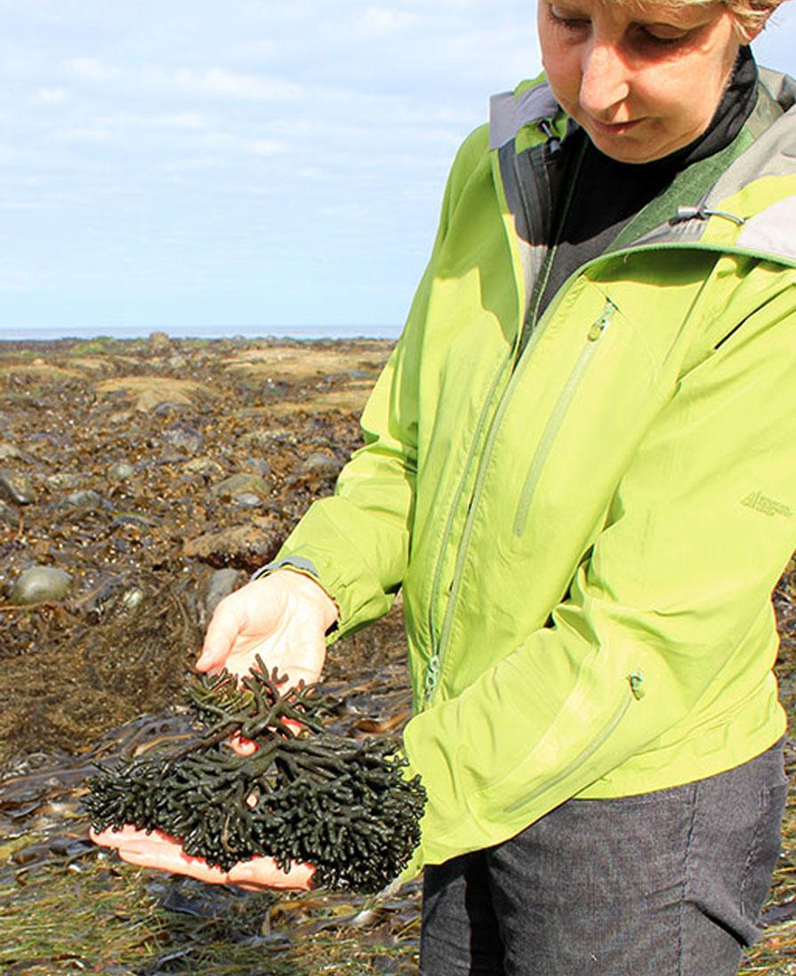Seaflora Skincare Seaweed Harvest