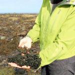 Travel to Wellness: Health Benefits of Seaflora Skincare