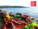 Globe and Mail - In Victoria we all scream for... Seaweed?