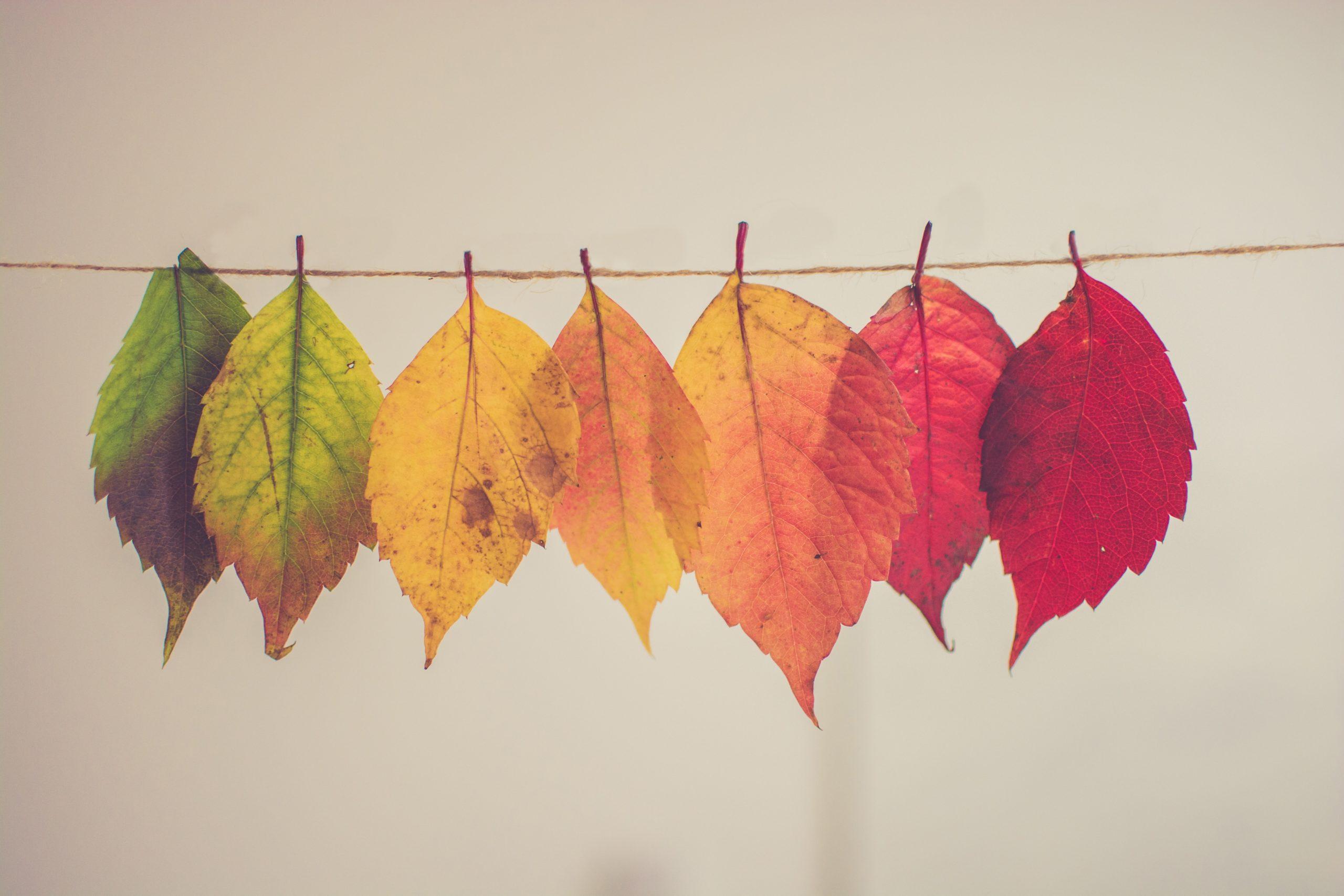fall rainbow leaves