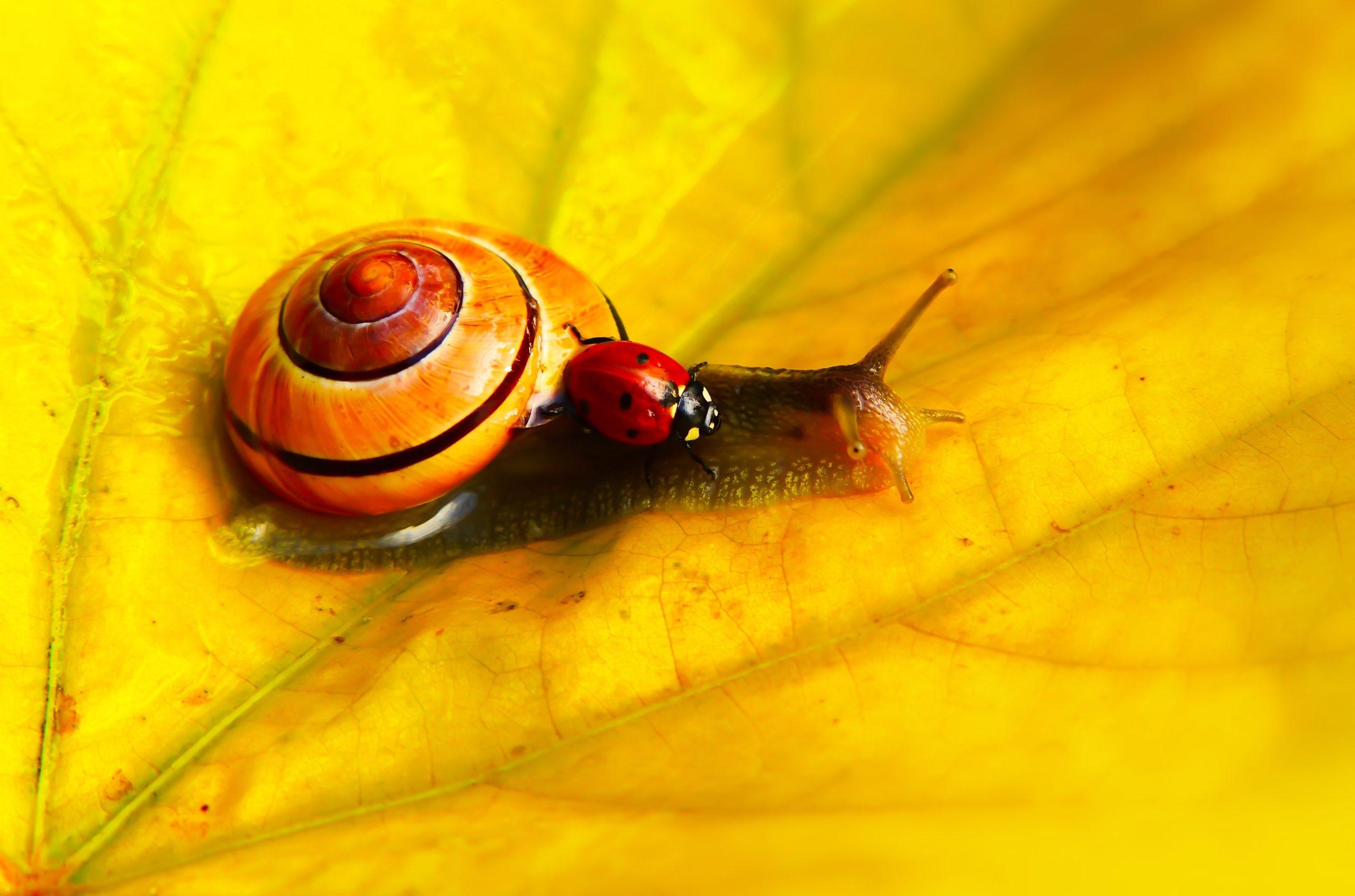 Lady Bug Snail Start of Spring