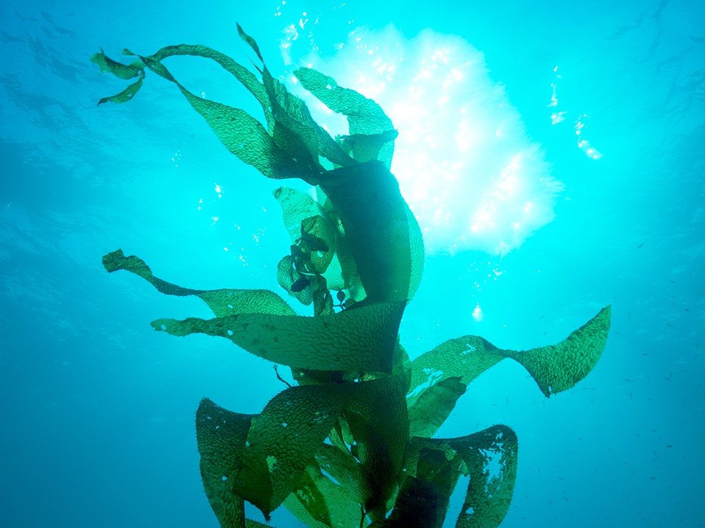 7 Ways Seaweed Helps In Skin Repair