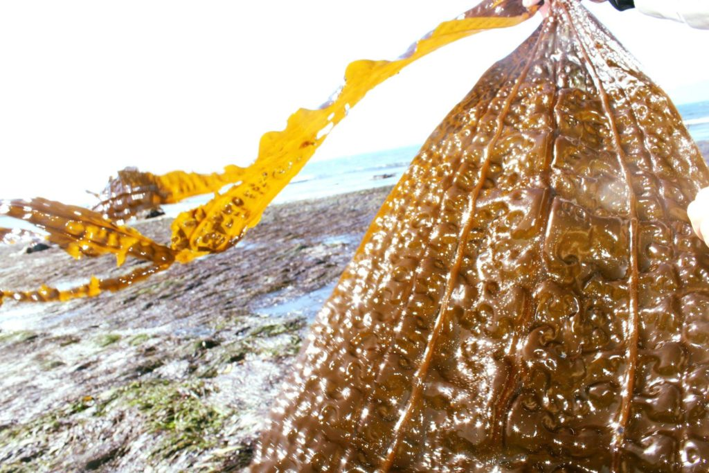 Seaweed Sunscreen Review - Here's the Seaweed SPF Science